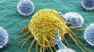 FcγRs调节以PD-1/PD-L1通路为靶标的抗体的抗肿瘤活性!