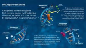 ASCO快讯:卵巢癌新药新进展大汇总