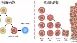 新药控制率100%:抗癌原理更有趣