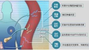 循环肿瘤DNA(ctDNA):监测肿瘤又一大利器