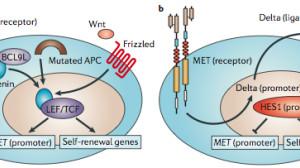 MET突变:靶向药不错,PD1不灵!