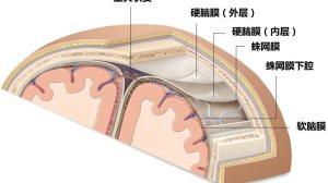 比脑转移还致命的脑膜转移:你懂么?