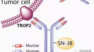 专治不服!全新抗癌药IMMU132继续挑战难治肺癌,控制率56%!