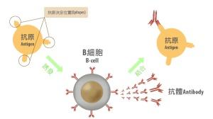 三大国产PD1抗癌数据大比拼:恒瑞、君实、百济