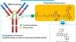 抗癌新药DS-8201:美国FDA认定为突破性疗法