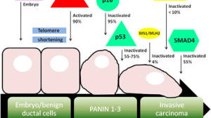 RAS突变肿瘤分三种:PD1有效率差4倍