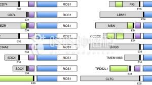 """权威总结!肺癌""""新""""靶点——ROS1融合最新进展"""