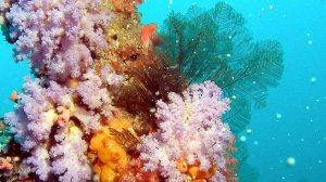 Lurbinectedin:海洋的瑰宝,广谱的抗癌明星