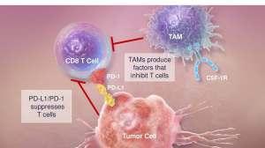 CSF1R单抗:癌王终于迎来靠谱免疫治疗?