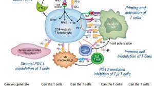 PD1联合乐伐替尼新数据:抗癌控制率93%