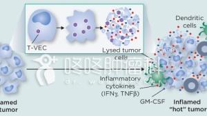溶瘤病毒再发威,全力进攻肝转移