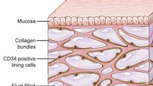 """科学家竟发现了人类的新""""器官"""":皮肤和内脏下的一层膜,难道真是人体""""经络""""?"""