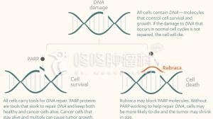 没有BRCA突变的卵巢癌患者也能用靶向药了!