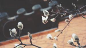 《城南花已开》: 一首骨癌少年专属的歌曲, 和整个世界给他的爱