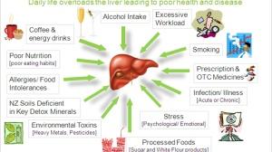 肝脏保卫战:这份万能保肝秘籍,请查收